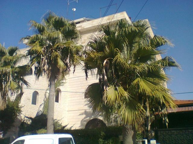 Пальмы в столице Иордании
