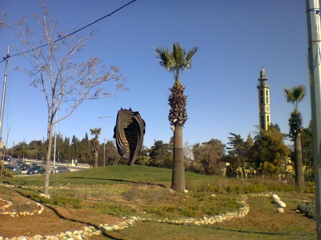 Деревья на Ближнем Востоке, на автомобильной развязке в Аммане.