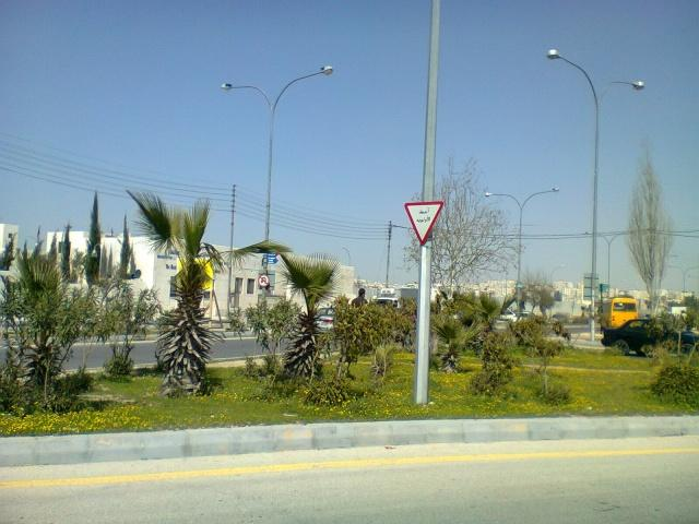 Молодые пальмы на развязке в Аммане