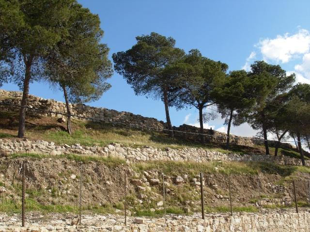 Кедры на горе в центре Аммана